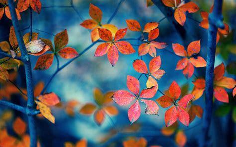 wallpaper blue leaves hd fall leaves wallpaper wallpapersafari