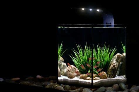 Lu Akuarium Diy id 233 es et astuces comment cr 233 er un nano aquarium
