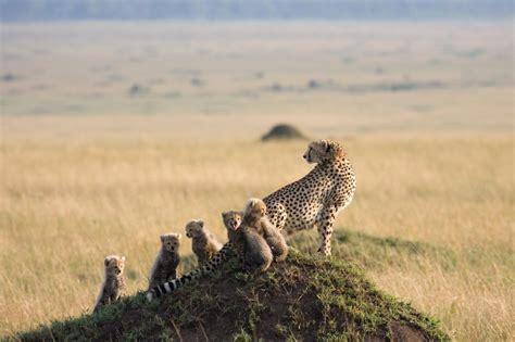 Safitri Syari kenya safari zanzibar honeymoon