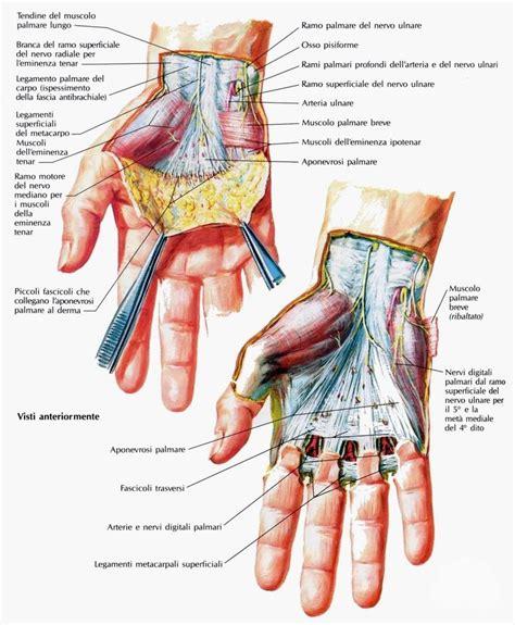 la mano sulla muscoli della mano medicinapertutti it