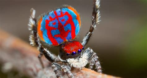 colorful spider being not enough for this colorful spider