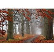Wallpaper Forest Trees Fog Autumn Path