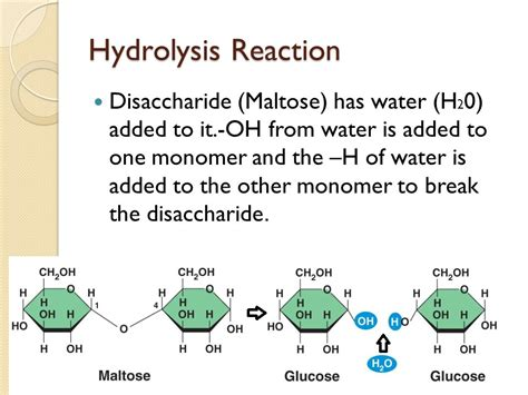 carbohydrates hydrolysis biochemistry notes macromolecules ppt