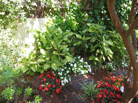 imagenes de jardines de sombra fotos de jardines y plantas de sombra