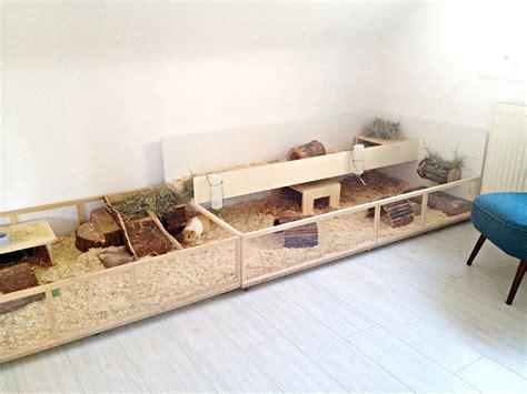 Haltung In Der Wohnung Meerschweinchen