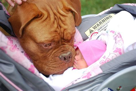 best dogs for babies cutest and baby photos