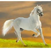 Beautiful Wallpapers White Horse