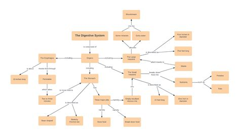 concept map exles and templates page 3 lucidchart