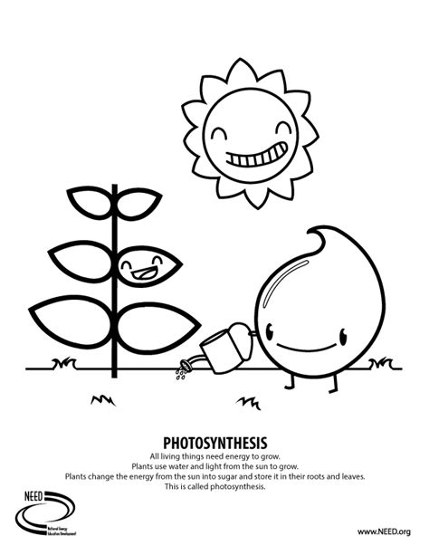 photosynthesis page coloring pages