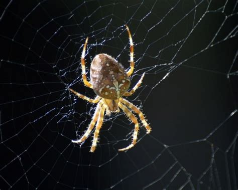 Garden Spider On Web 50 Free Beautiful Desktop Backgrounds That Look