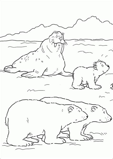 little polar bear coloring pages coloringpagesabc com