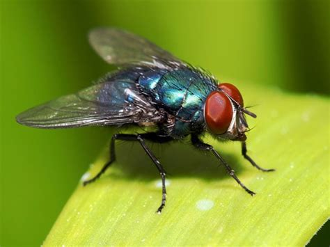get rid of flies in house tips to get rid of flies in the house
