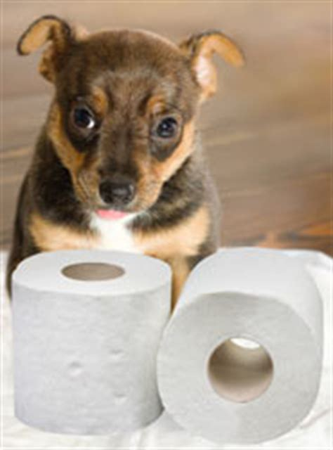 signs of bladder infection in dogs urinary tract infection uti in dogs doghealth