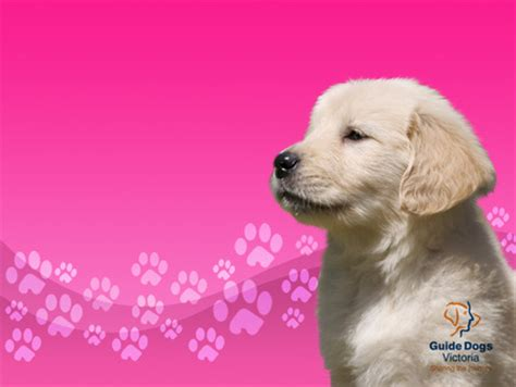 wallpaper pink dog guide dog puppy dogs animals background wallpapers on
