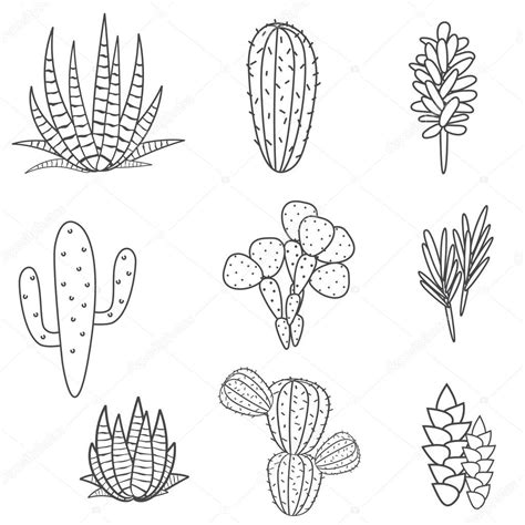 succulents plant vector set botanical black  white