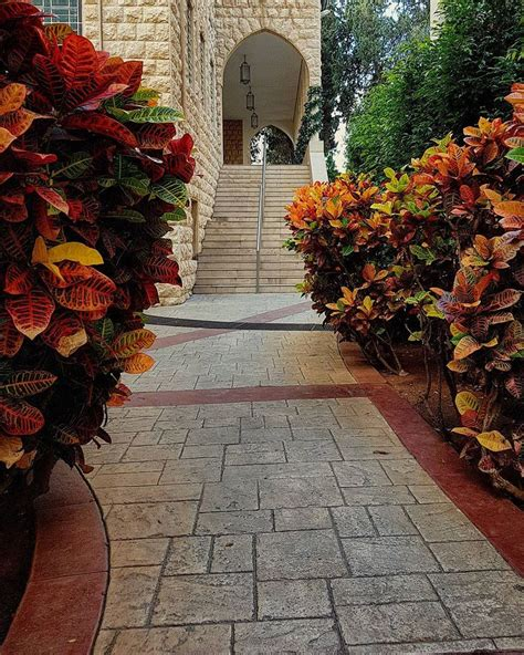 Mba Lau Beirut by No Single Colour Paints My Path Autumn Lebamericanuni