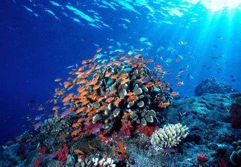 los animales marinos marine wwf postula nuevo modelo de inversi 243 n para recuperar los ecosistemas marinos wwf