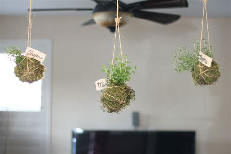 hanging from ceiling diy hanging indoor garden planter