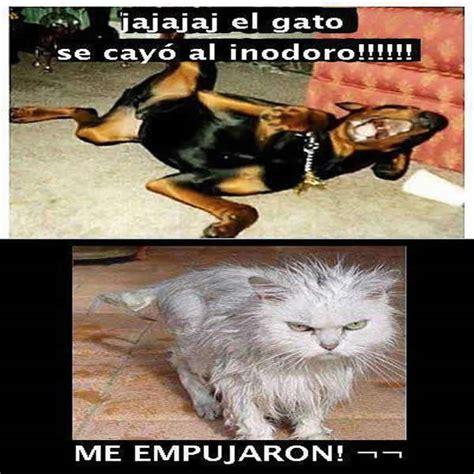 imagenes asombrosas y graciosas de animales imagenes graciosas de perros y gatos con frases imagui