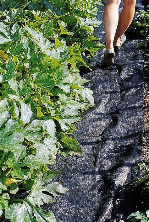mulching vegetable garden mulching vegetable gardens www imgkid the image