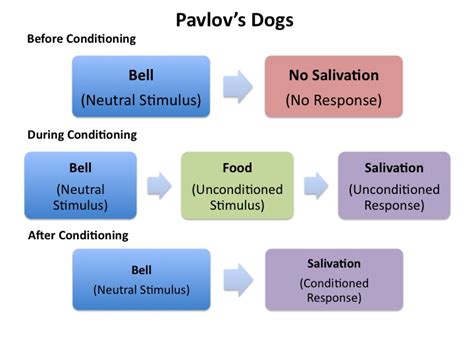 learning classical conditioning playlearnparent