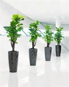 Ikea Office Designer robuste zimmerpflanzen beliebte pflegeleichte topfpflanzen