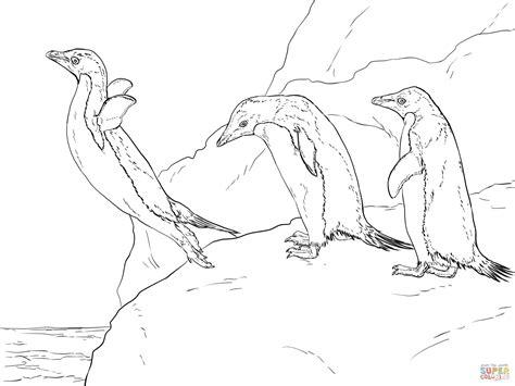 realistic penguin coloring page dibujo de tres ping 252 inos adelaida para colorear dibujos