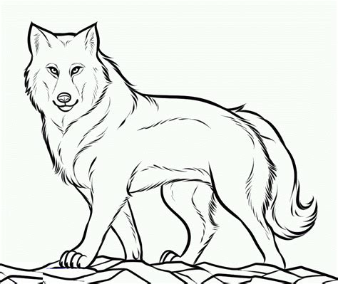 free printable wolf template sketch coloring page