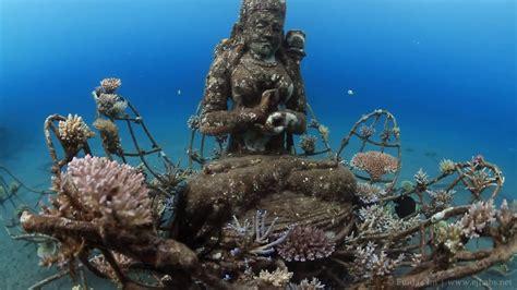 artificial reef  coral goddess  pemuteran bali