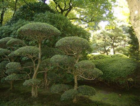 piante da giardino alto fusto piante alto fusto da giardino decorazioni per la casa