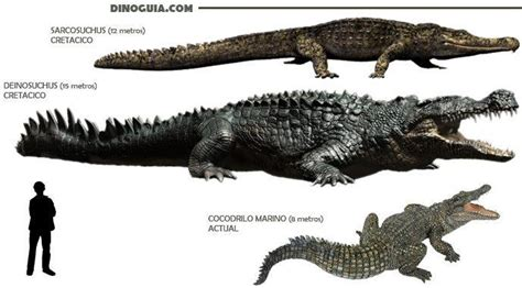 Size and scale of giant crocodiles/kin; approximations ... Giant Alligator Dinosaur