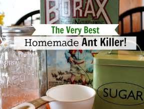 best ant killer bing images