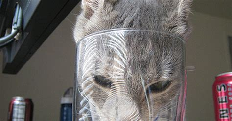 my is a lot of water why does my cat drink a lot of water ehow uk