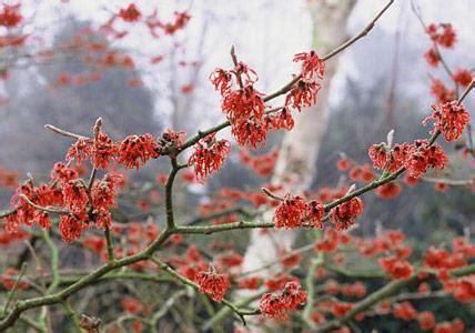 Garten Pflanzen Februar by Garten Im Februar Praktische Tipps Living At Home