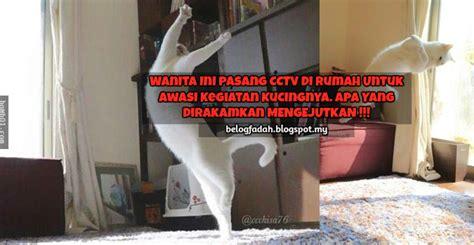 Berapa Pasang Cctv Di Rumah wanita ini pasang cctv di rumah untuk awasi kegiatan kucingnya apa yang dirakamkan mengejutkan