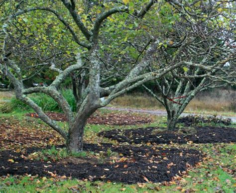 compost for fruit trees food forest beginnings and fall tasks in the orchard