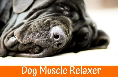 relaxers for dogs best guide to purchase relaxers for dogs us bones