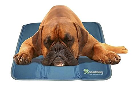 cooling pads for dogs 9 best cooling beds for your rover