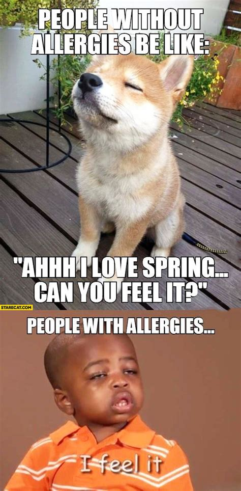 best shoo for dogs with allergies without allergies be like can you feel the with allergies i