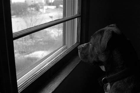 lonely puppy lonely by photolight on deviantart