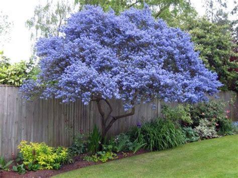 alberi giardino sempreverdi piante ornamentali da giardino sempreverdi decorazioni
