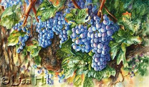 step by step watercolor demonstration of purple grapes artist hill
