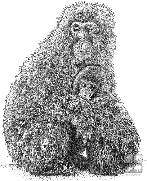 japanese macaque coloring page japanese snow monkey or macaque macaca fuscata line art