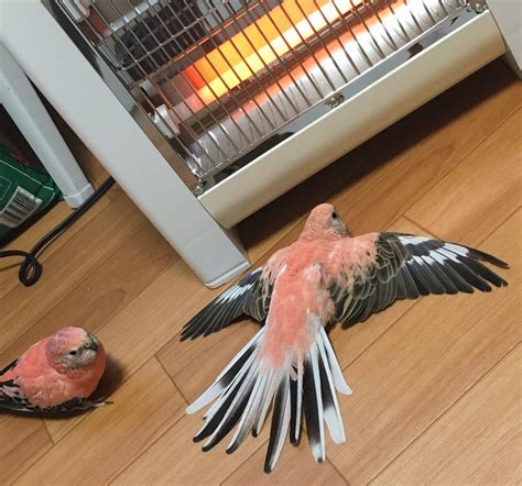 parrot owner left in the cold in japan as his pet bird