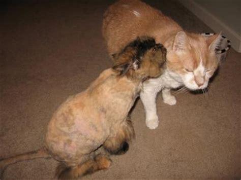 cat howling   time   death  feline friend
