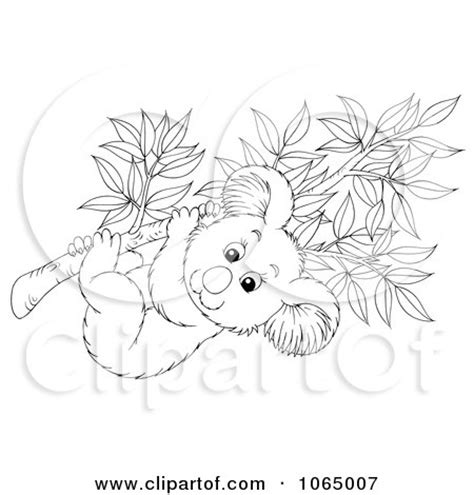 eucalyptus tree coloring page how to draw eucalyptus tree