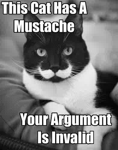 Handlebar Mustache Meme - 49 best funny cats images on pinterest