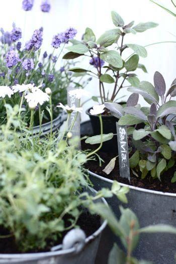 kitchen herb garden urban sacred garden urban sacred 111 best soaps resins herbs oils incense images on
