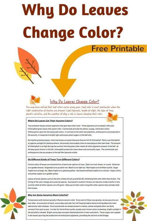 why do leaves change color printable science