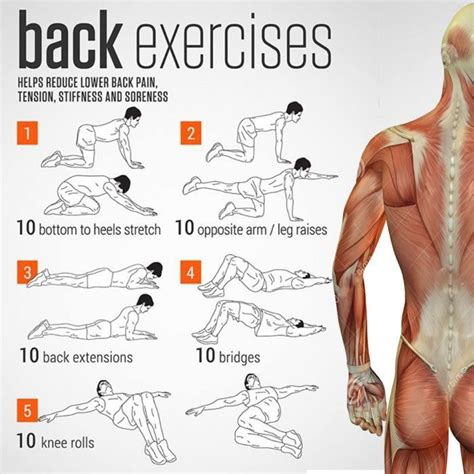 back exercises charts health helps reduce lower back sore yeah we workout work out